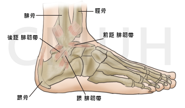 挫傷 治療 骨 骨挫傷って何?症状・原因・治療法、他の炎症との違いを知ろう!