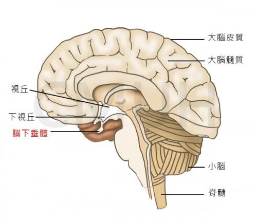 症 機能 低下 下 垂体